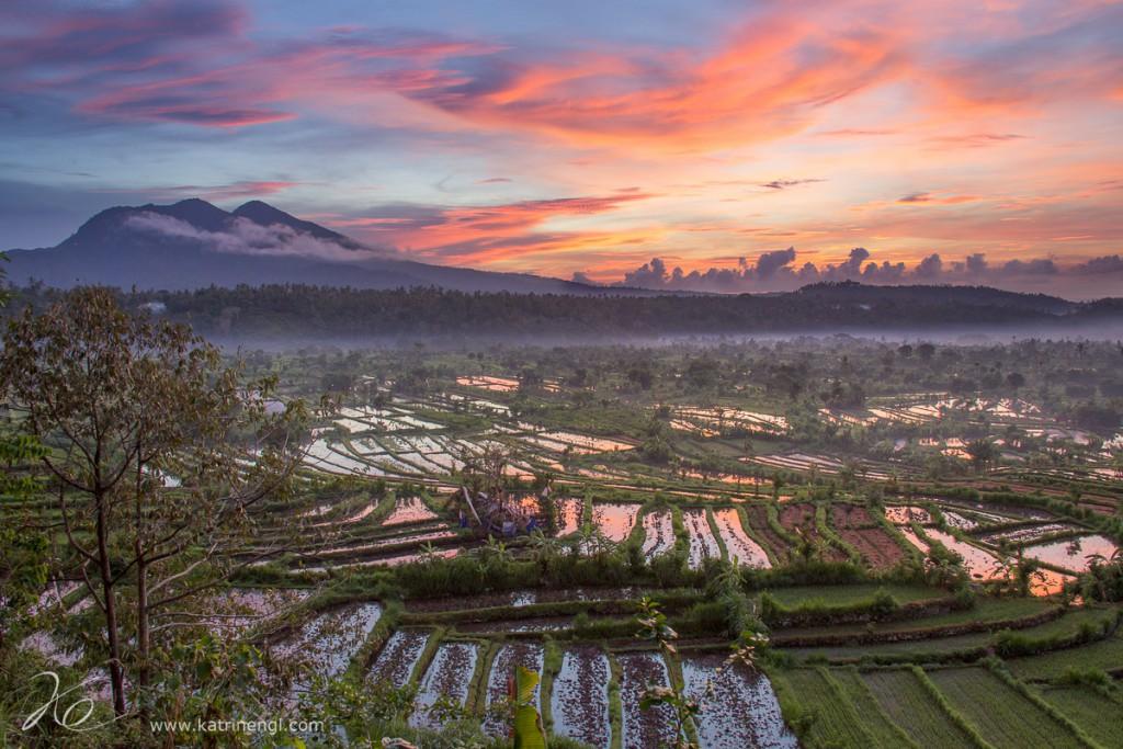Rice-terraces-Bali-1024x683.jpg