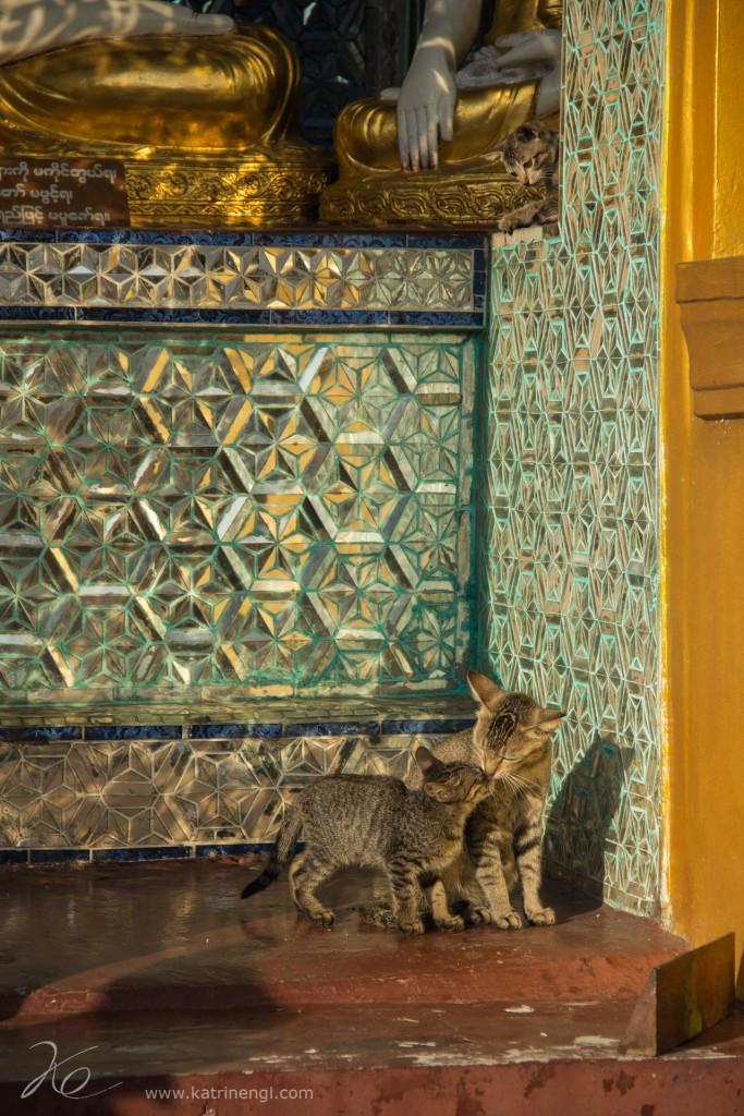 Cats Shwedagon Pagoda Yangon Myanmar