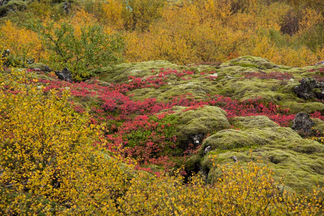 Autumn colors in Iceland