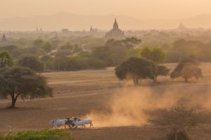 Oxcart at sunset.jpg