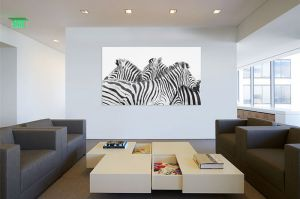 Office-Zebras.jpg
